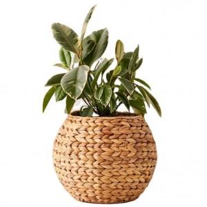 HYACINTH PLANT POT